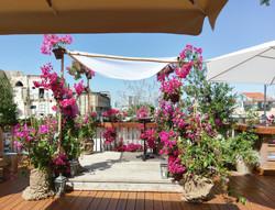 Fuchia Bouganvillea Jaffa Rooftop (4)