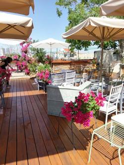 Fuchia Bouganvillea Jaffa Rooftop (9)