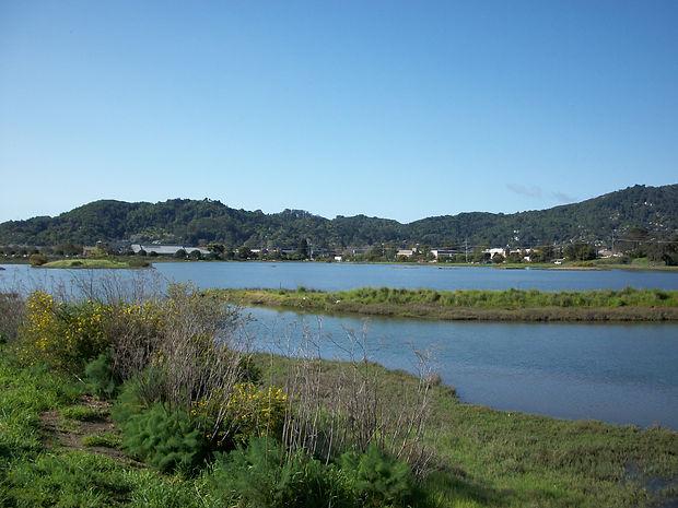 19 Bayside Wetlands 6.jpg