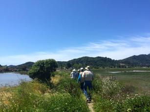 Marsh Walk 7.jpg