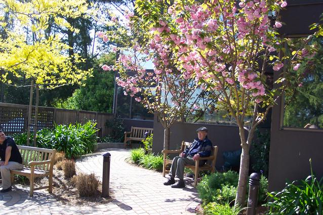 Library Reading Garden 3.JPG