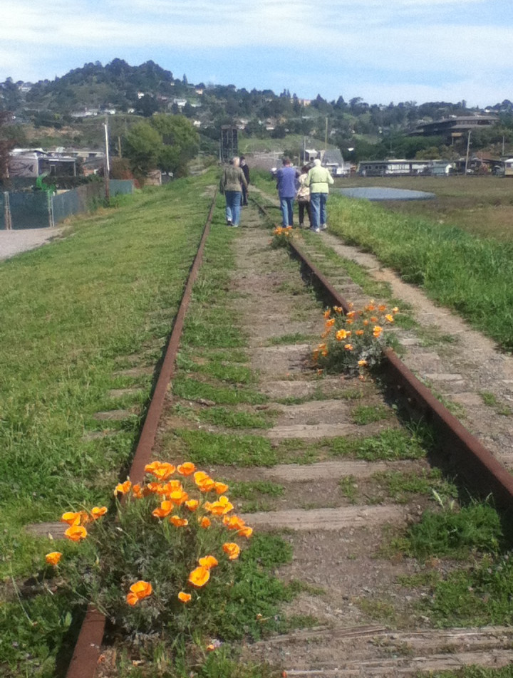 Old railroad tracks north of industrial area offer views of Heerdt Marsh and Corte Madera Ecological Reserve.