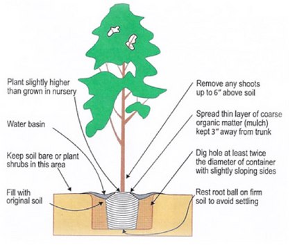 Planting Instructions.png