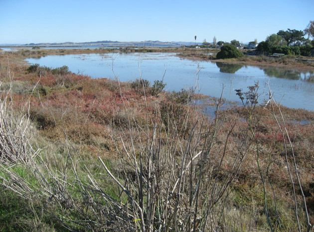 San Clemente Creek at high tide.JPG