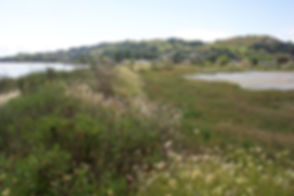 Walking Along the Dike (1).jpg