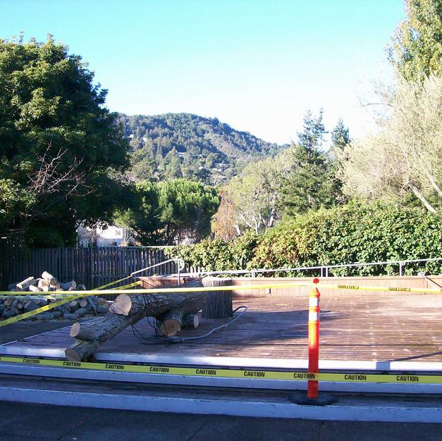 1 Hazardous trees are removed.JPG
