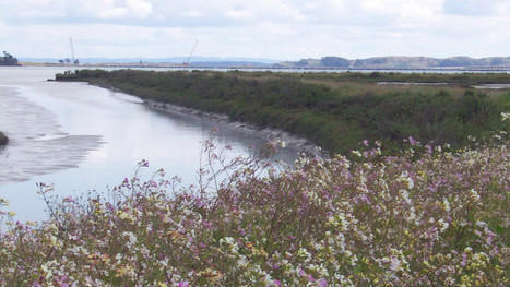 Cleanup of Entrance to Corte Madera Ecological Reserve