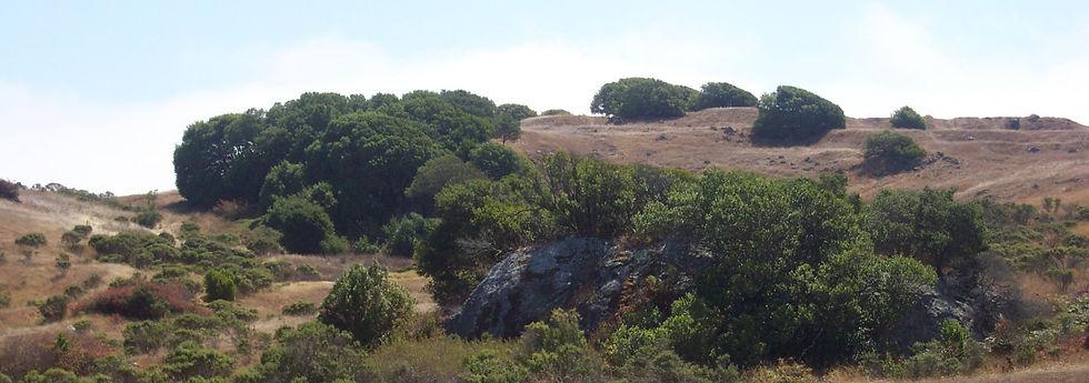 Corte Madera Ring Mountain