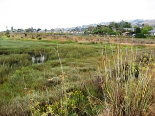 Marta's Marsh.JPG