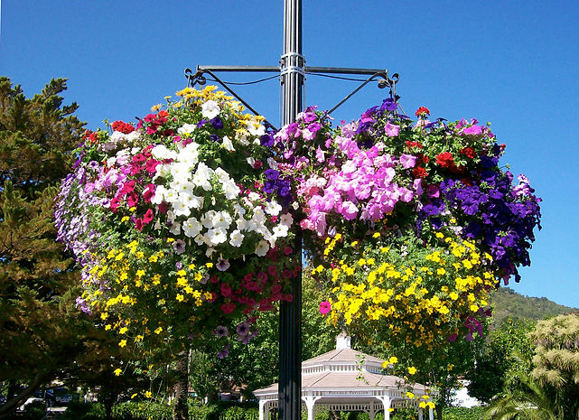 Corte Madera Hanging Baskets