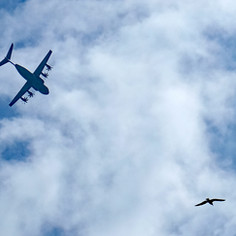 same airbus, same seagull