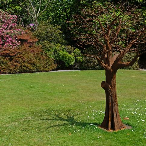 iron tree and shadow