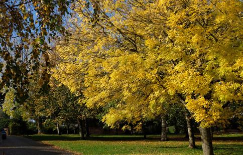 autumn in Regent Square