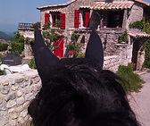cheval frison à Gras