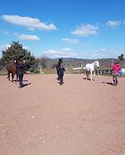 Travail au sol équitation éthologique