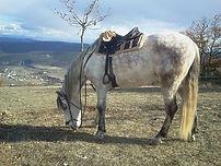 Randonnée équestre sud Ardèche