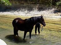 jument baie baignade Ardèche