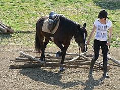 Travail à pied avec cheval en main