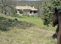 Jument qui regarde la maison en pierres en Ardèche