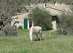 Séjour équestre en Ardèche