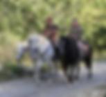 paardrijden in ardeche south of france