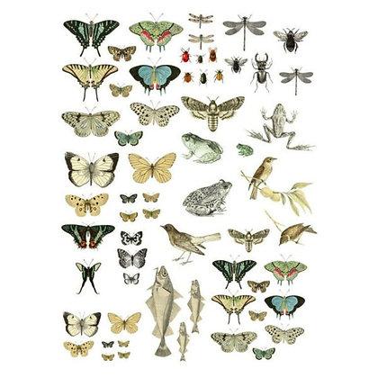 Entomology Etcetera