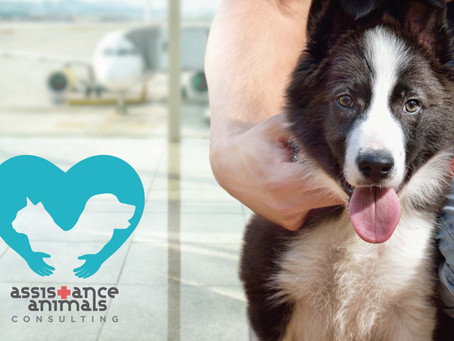 Important Factors to Consider for Assistance Animals in Airports and Flying on Airplanes
