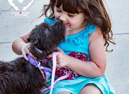 4 Ways to Protect Human and Animal Health in Animal-Assisted Health Care