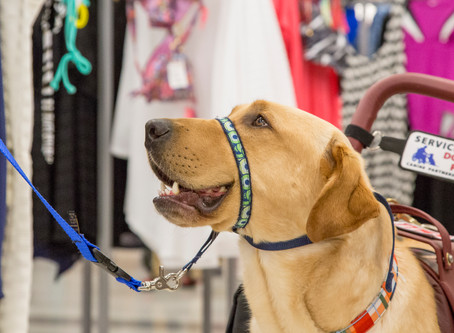 Assistance Animals Consulting supports new Alabama law advocating for service animals