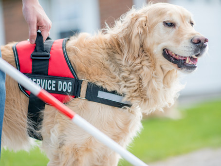 5 Considerations for Engaging with Service Animals in Public