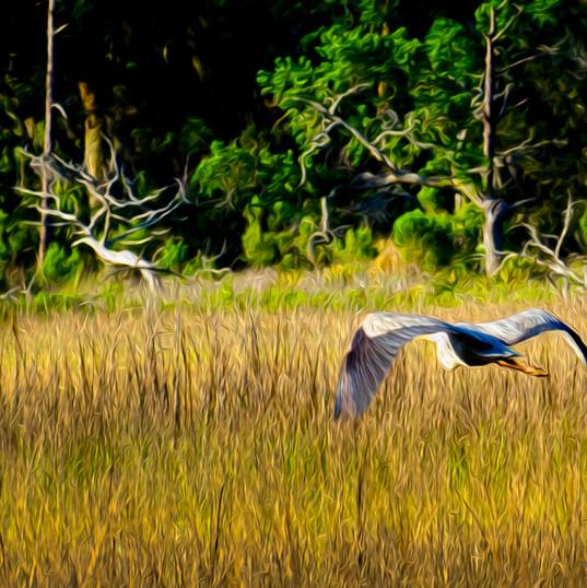 Heron Painting crop2.jpg