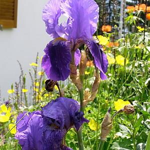 Swiss Flowers