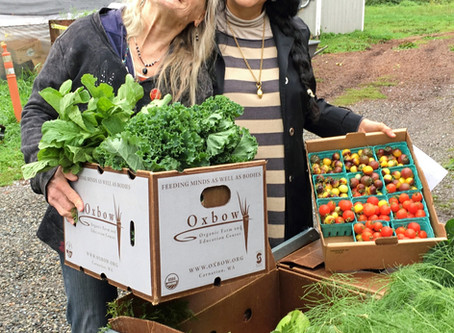 Creating healthy communities - Distribution Day