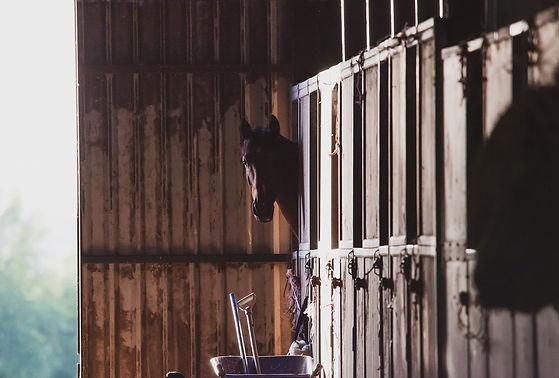 horse-in-stable-4347397_1920.jpg