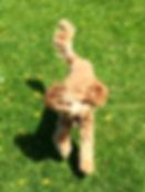 Running Bernard.jpg