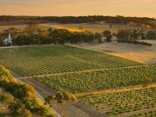 Three of the world's top vineyards have been named in South Australia!