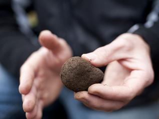 How Australia is Demystifying the Secretive World of Truffles