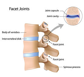Facet gewicht, lumbalgie, rugpijn, lage rug, blokkage lage rug, sporkinesitherapie, kinesist mechelen, sportkinetics.