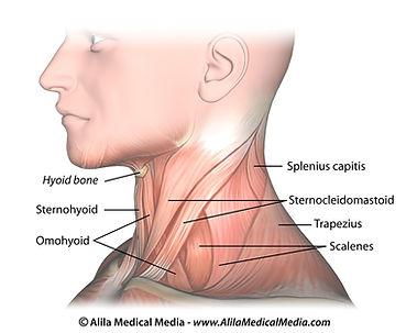 Nekpijn, cervicalgie, spondylolyse, sportkinetics, sportkinesitherapie, revalidatie, kinesitherapie.