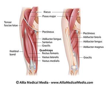 Heupgewricht, heuppijn, liespijn, revalidatie, sportkinesitherapie, revalidatie, Sportkinetics, liespijn, adductorpijn, heupflexoren, adductoren.