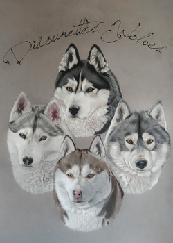Didounettes Wolves