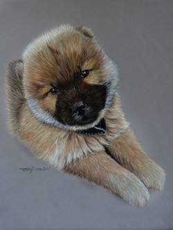 Rooky chiot