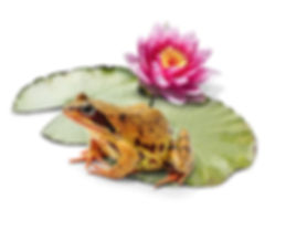 frog,-lilly-and-pad-for-pond-netting.jpg