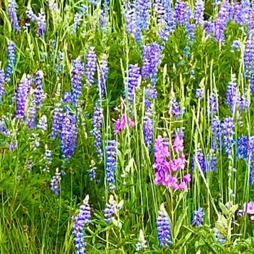 2020 Utah Wildflowers // Khosrow R. Shotorbani