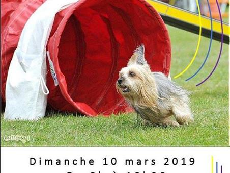 """Agility """"terriers du CFATDT"""" à Bouguenais (44)"""