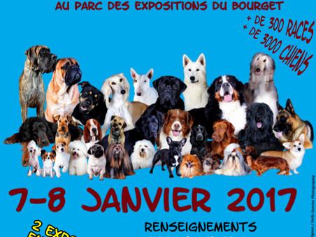 Paris Dog Show ! Spéciale CFAT DT