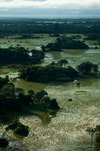The size of the Pantanal is ten times that of the Floridian everglades, and is 3% of world wetlands.