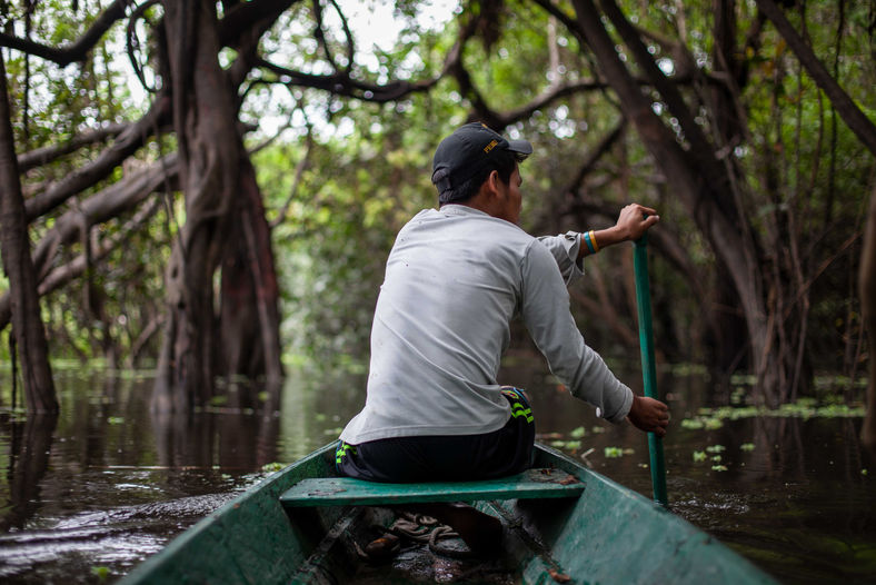 """Gerson, a local guide for tourists in the jungle, canoes towards one of the oldest trees in the Tahuyao basin in search for the """"Shanshu"""" bird, otherwise known as the Hoatzin bird."""