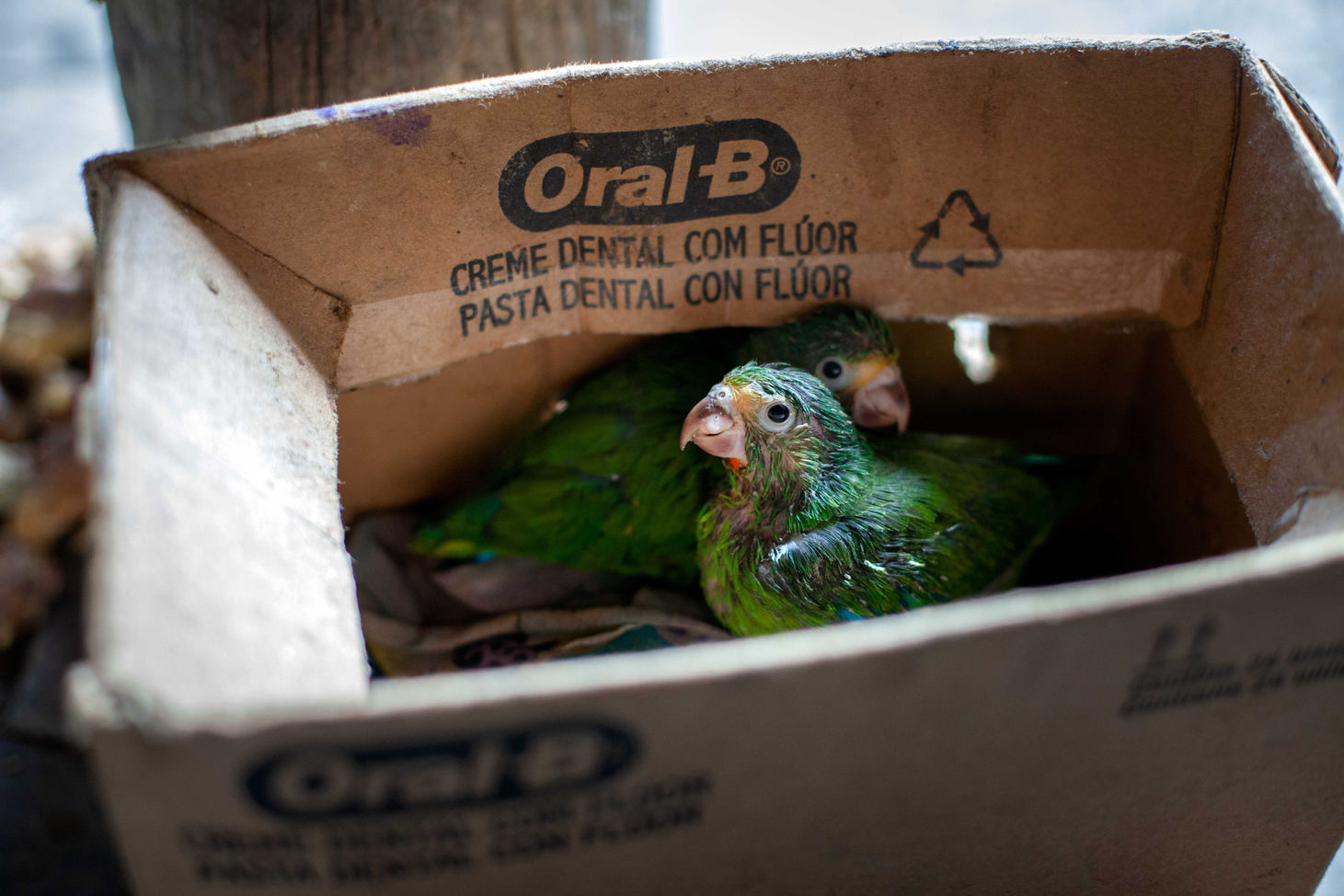 A common business in isolated areas are illegal trafficking exotic birds and parrots are and sold as exotic pets.