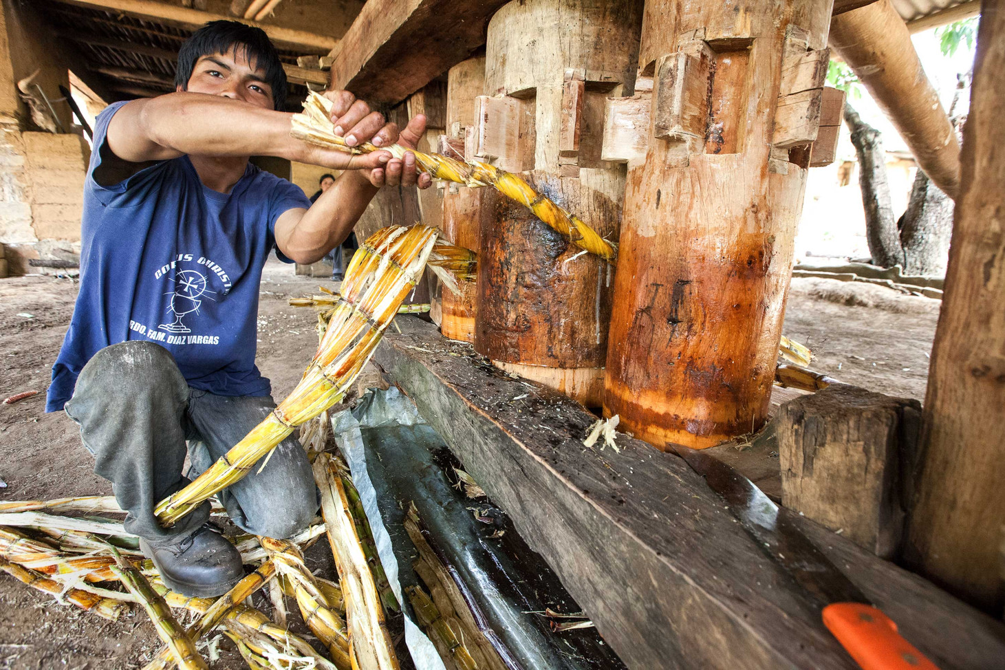 A boy grinds up sugar cane to create juice.